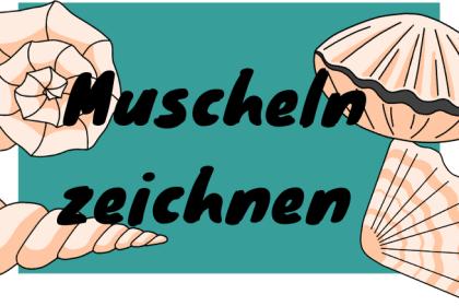 Muscheln zeichnen