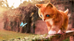 Kitten and the Butterfly