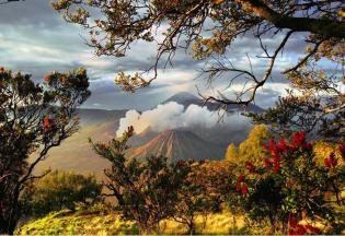 "Blossoming around Bromo volcano Indonesia, Facebook page ""Beautiful Planet Earth"", https://www.facebook.com/pages/BEAUTIFUL-PLANET-EARTH/198320350202343?fref=ts"