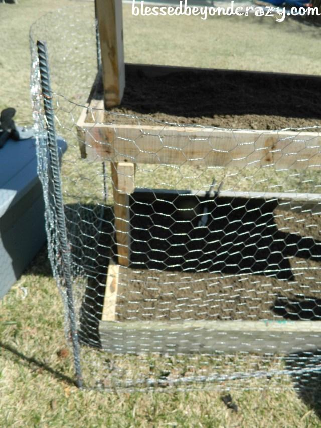 gardeing box with chicken wire