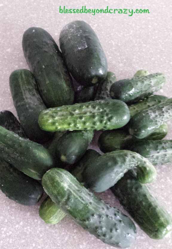 pickle relish2