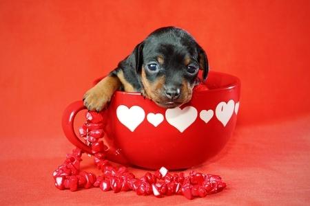 Valentine's Day Ideas 6