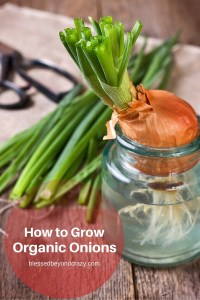 How to Grow Organic Onions