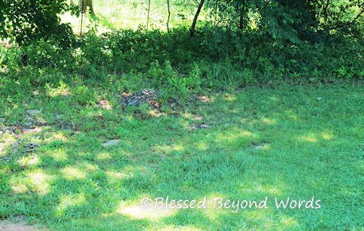 Our Garden Spot