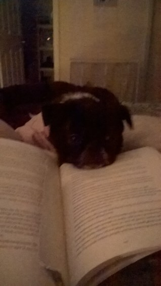 annabelle-keeping-me-company-while-i-read-2