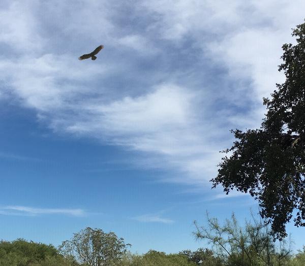 hawk and Sky