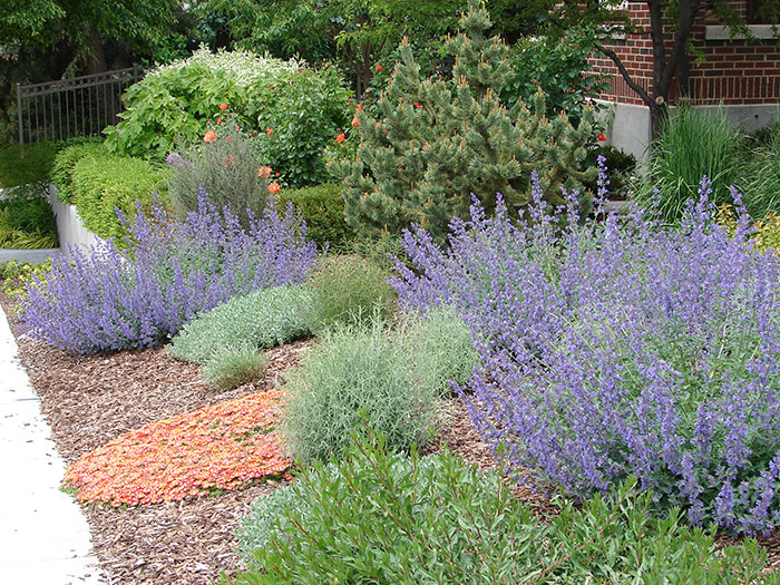 Xeriscape landscaping or simply xeriscaping is increasingly becoming  popular today as many people are converting to eco-friendly means. - Eco-Friendly Landscaping: What Is Xeriscape? - Blessing Gravel