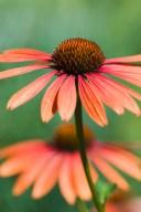 Flower mix from Van Dusen Botanical Garden - Vanvouver, B.C. (August 14th, 2008)