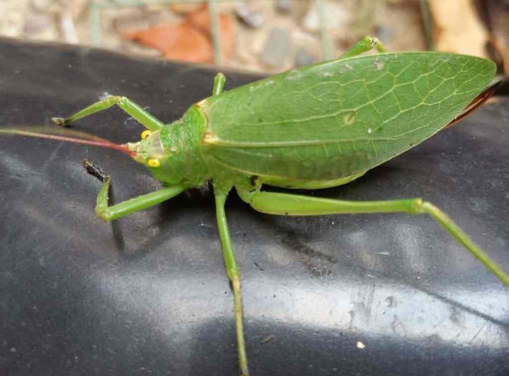 Todays garden companion bigbugsinthegarden