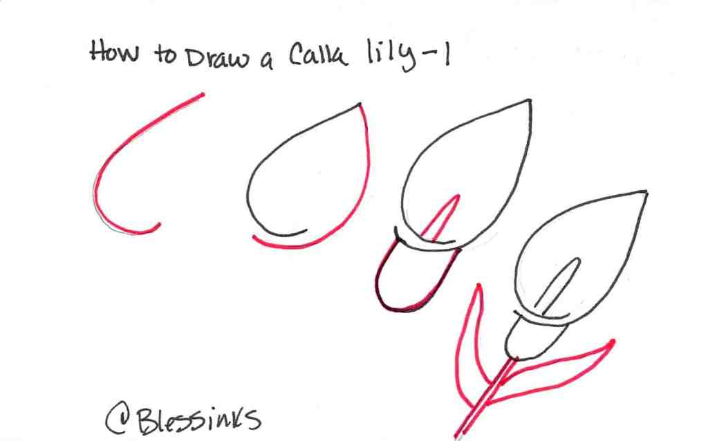 How to Draw a Calla Lily - #1