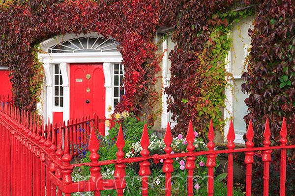 Colorful Garden Ideas: How To Choose Your Garden Color Palette