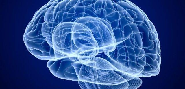 Αποτέλεσμα εικόνας για νευροβιολογία