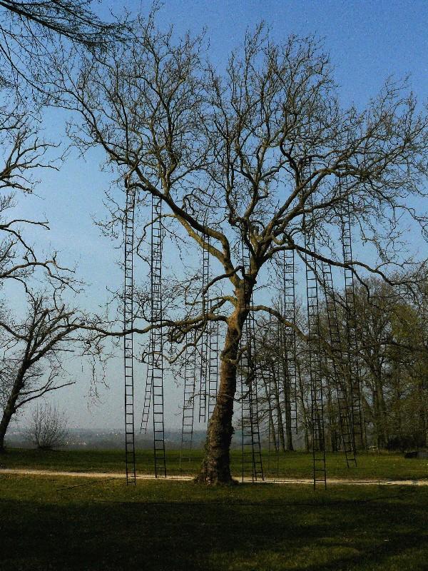 Les Arbres Ne Montent Pas Jusqu'au Ciel : arbres, montent, jusqu'au, Cobalt:, Arbres, Montent, Jusqu'au