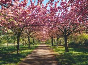 So schön blüht der Frühling - cover