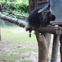 Zoologischer Garten... Teil 3