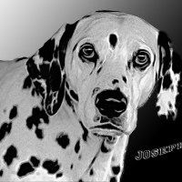 Hunde - Runden - Kuriositäten.... 2