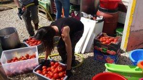 Hot Food Idomeni Helfer beim Waschen der Tomaten