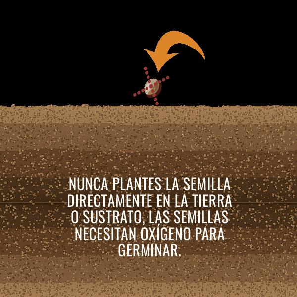 NO PLANTES LA SEMILLA EN LA TIERRA