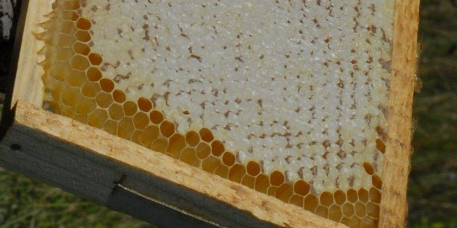Geriausias medus