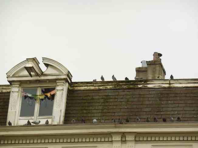 dak-duiven-nassaukade