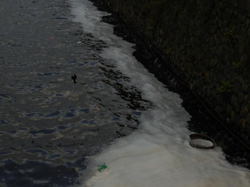 meerkoet-ton-westerdoksdijk-het-steenen-hoofd