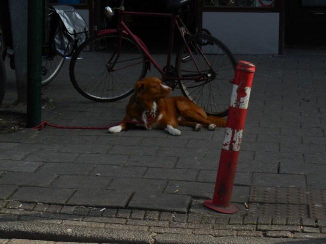 rode-hond-ah-bos-en-lommerweg