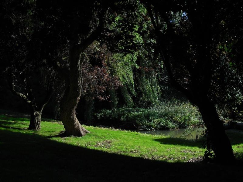 zon-gras-water-nabij-vredehof