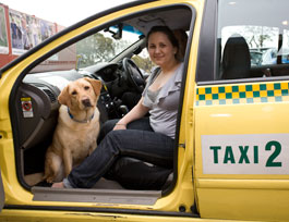Photo shows a women in the front passenger seat of a taxi. Her guide dog, a yellow lab, is on the floor at her feet. The door of the cab is open and she is in the left-hand side of the cab, as it is a cab from a country where drivers drive on the right.