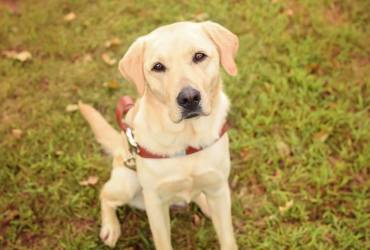 To Frances, My Guide Dog, On The Day of Your Arrival