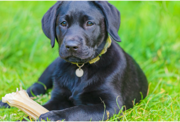 """""""8"""" Ways Applying To Guide Dog School Is Like Applying To College"""