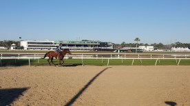 Taking in some morning workouts at Tampa Bay Downs.