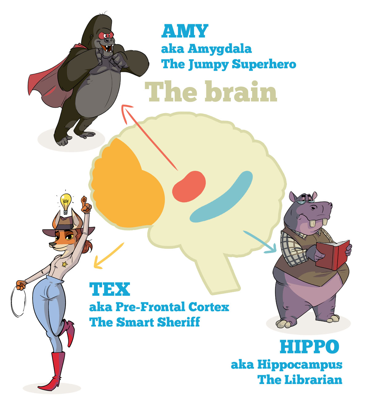 Mindfulness And The Brain Explained Amygdala Box
