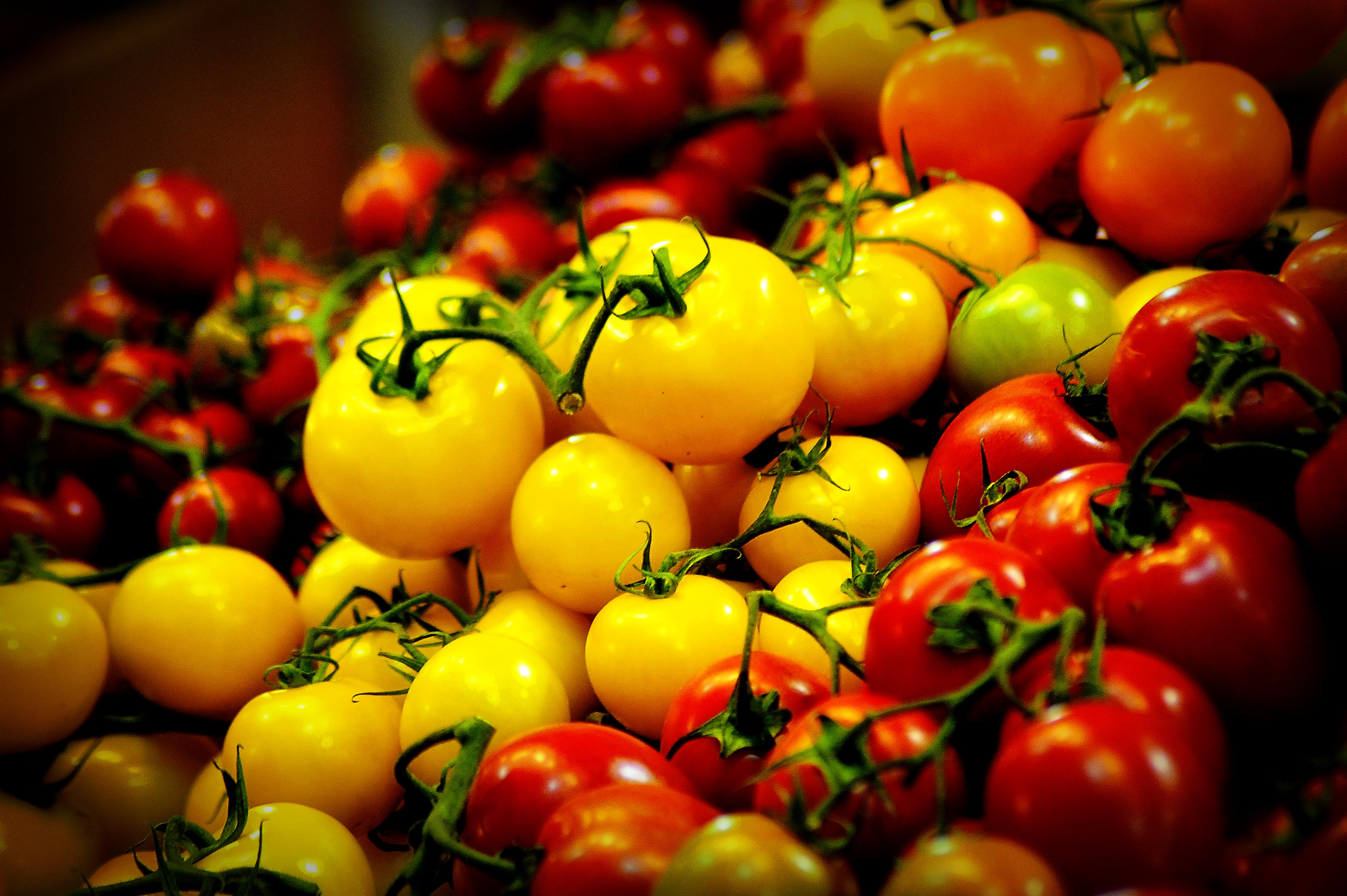 homeschool-bliss Your Farmers Market
