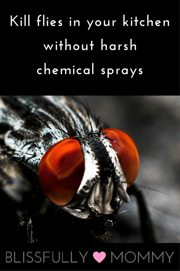 easy-way-to-kill-flies