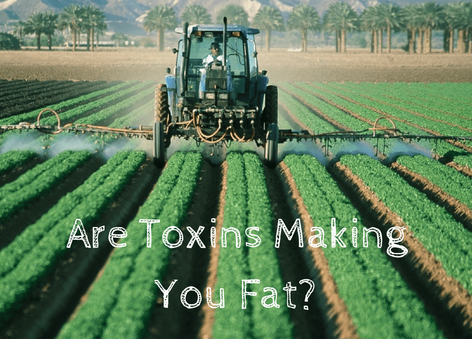 Are Toxins Making You Fat?