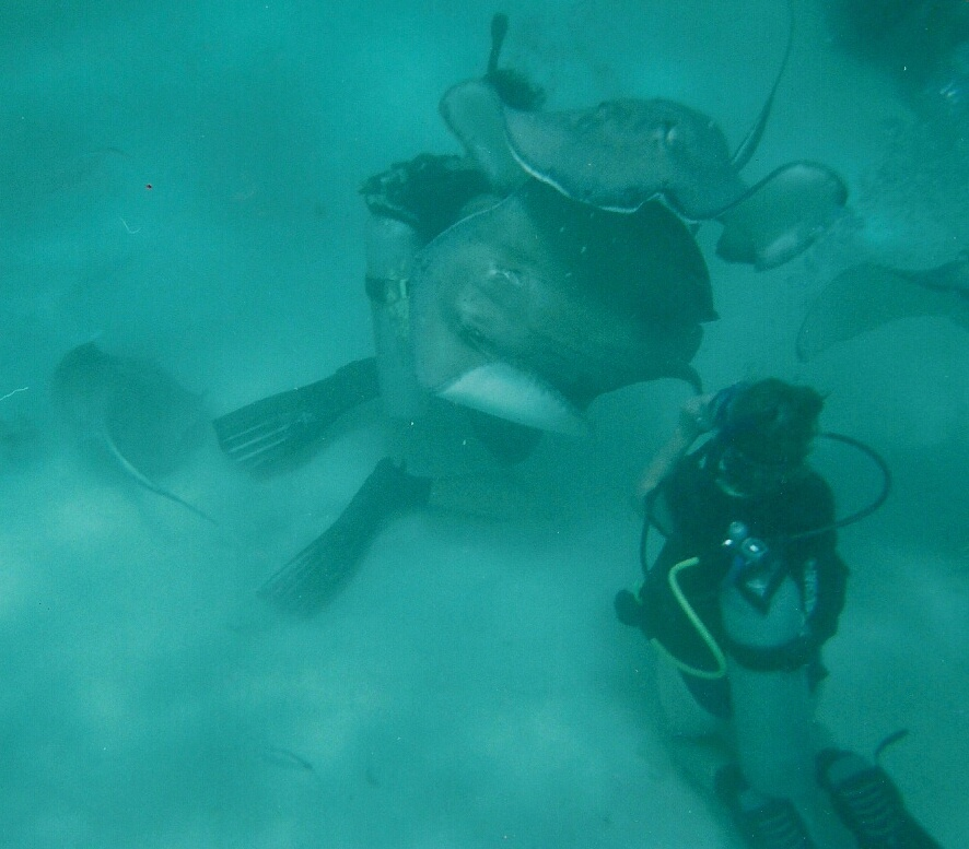 A picture of me diving in Stingray City. It was incredible.