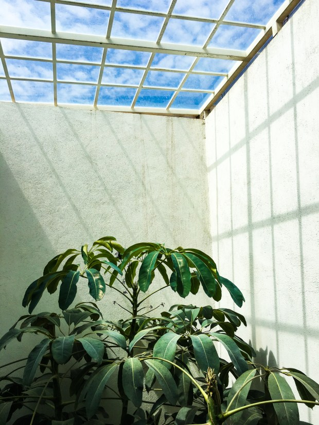 A skylight and the top of an indoor tree.