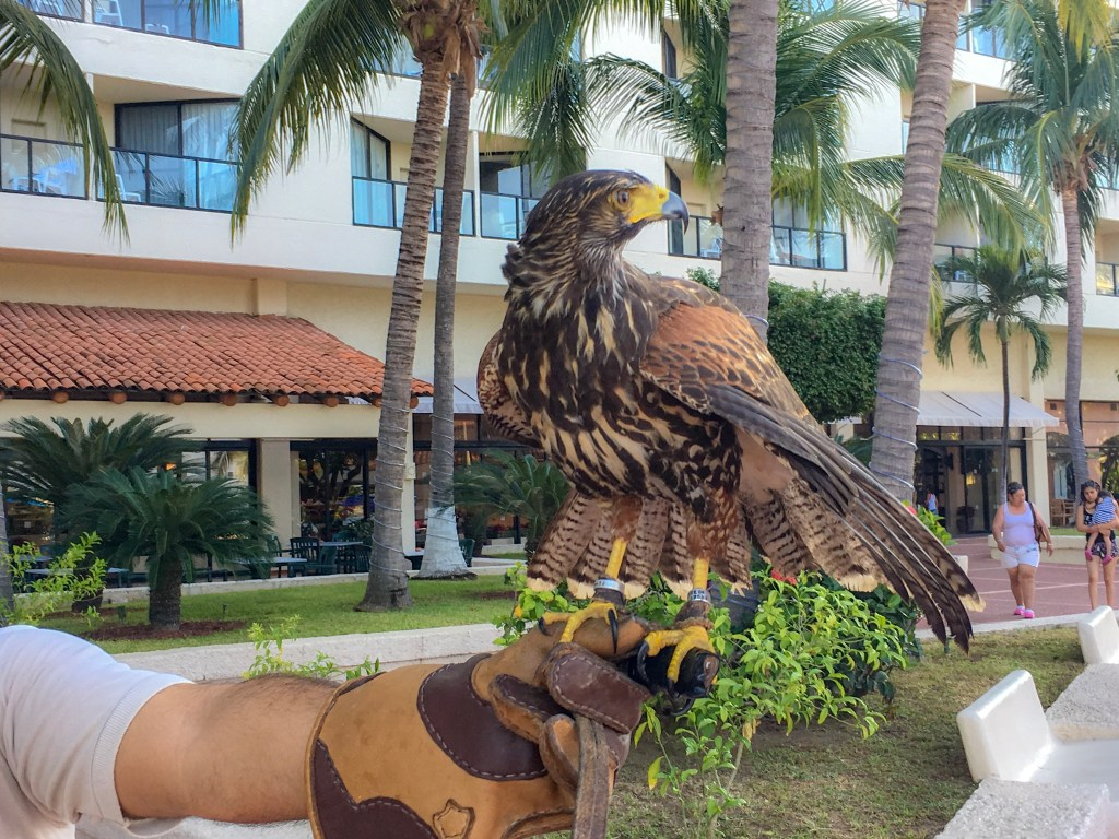 A brown falcon rest majestically on the leather-gloved hand of its human.