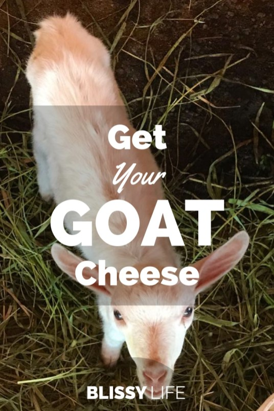 Get Your GOAT Cheese