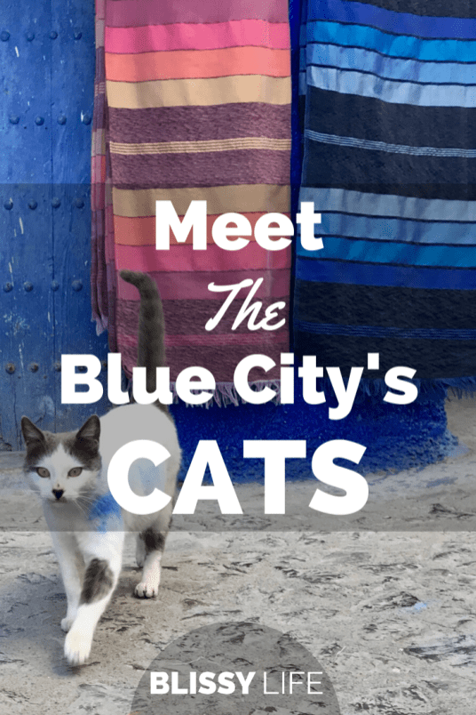 Meet The Blue City's CATS