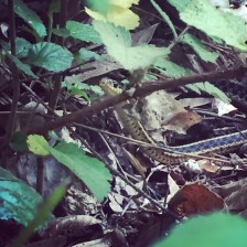 cute little snake I found!