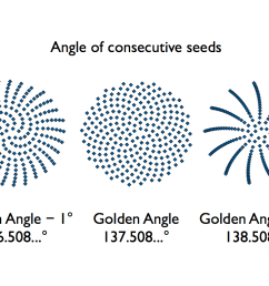 sunflower seed golden angle diagram 001 [ 1024 x 768 Pixel ]