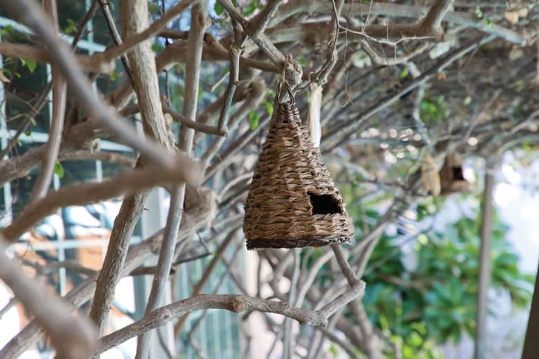 Bird home on a branch