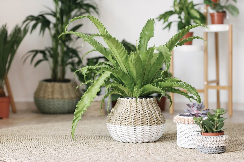 Home & Soul plants