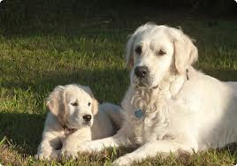 gossos lleials