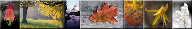 Splendor in the natural world – wildflowers, fall colors, icy artistry, and more