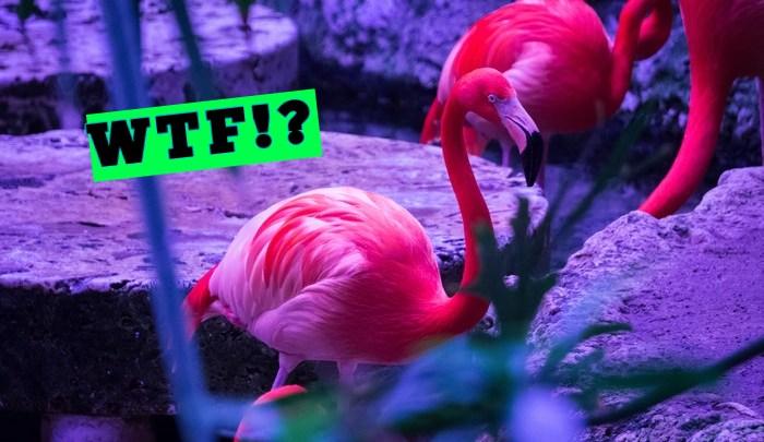 WTF is an ETF?!