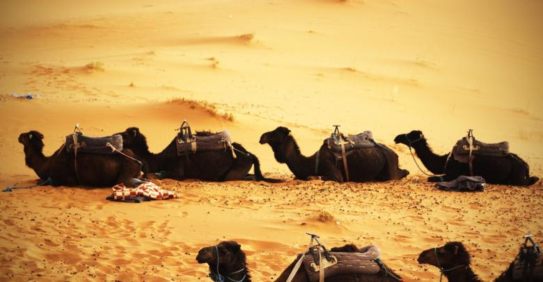 Desert Safari Dubai - Defeat the Sand & Explore the Culture