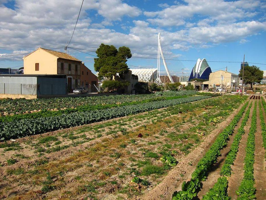 L'horta de València no és un parc temàtic (i II)