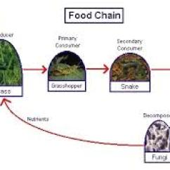 Taiga Food Web Diagram Westinghouse 12 Lead Motor Wiring English Is Cool! » A Clil Lesson (science In English): Chains